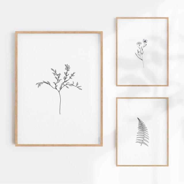 Herbarium White I