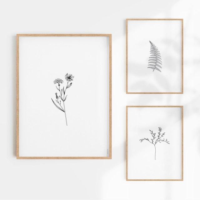 Herbarium White III