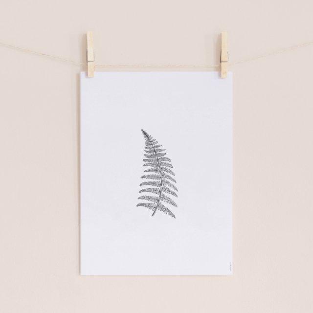 Herbarium White II