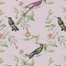 Colibri Pink